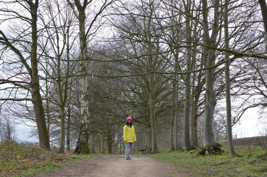 Ripley Castle Walk