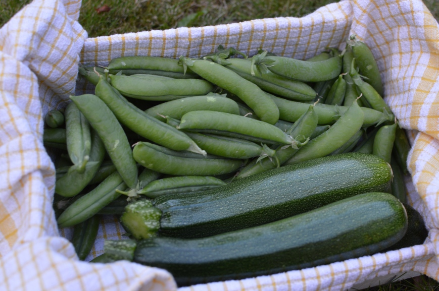 Courgettes and peas from mum's garden