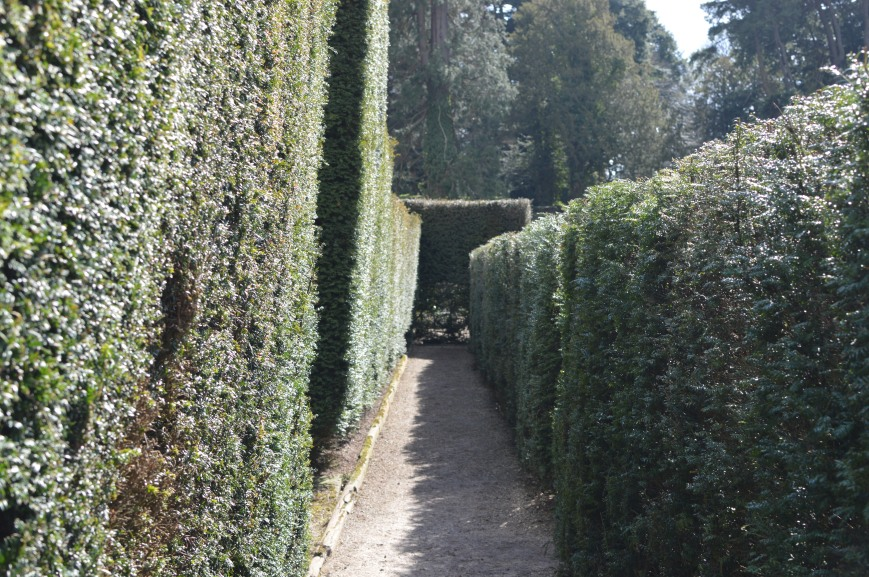 Chatsworth Maze (2)