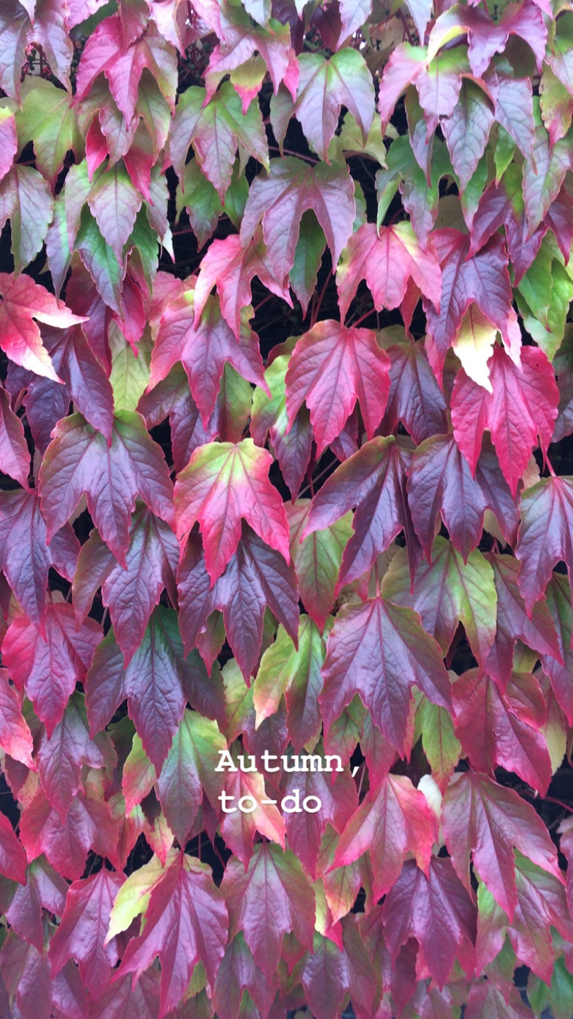 Autumn to-do bucket list