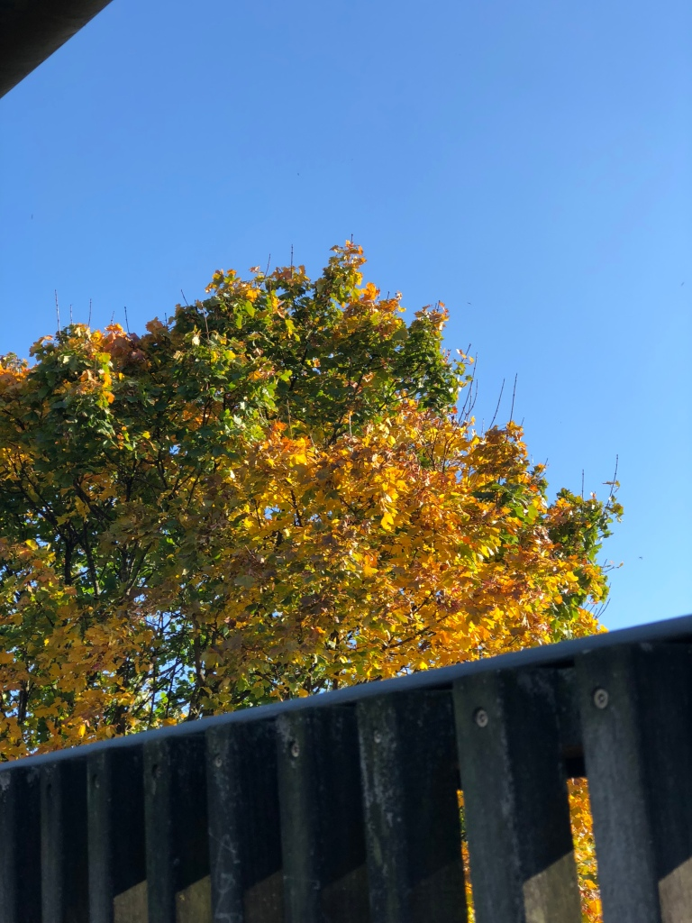 Autumn sights in Manchester